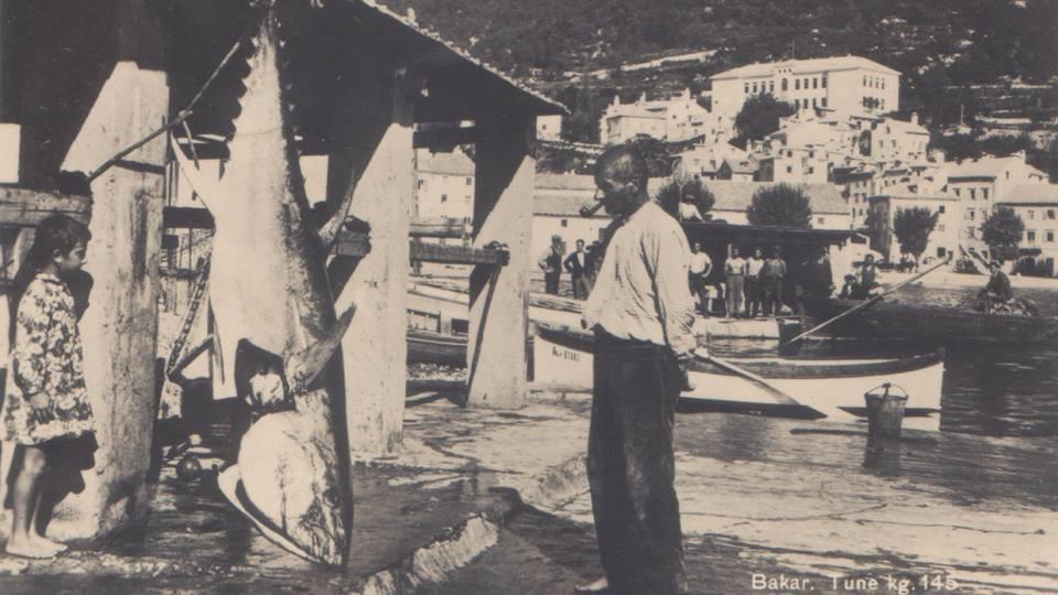 london Dalmatian Cuisine Zadar Hvar Dubrovnik