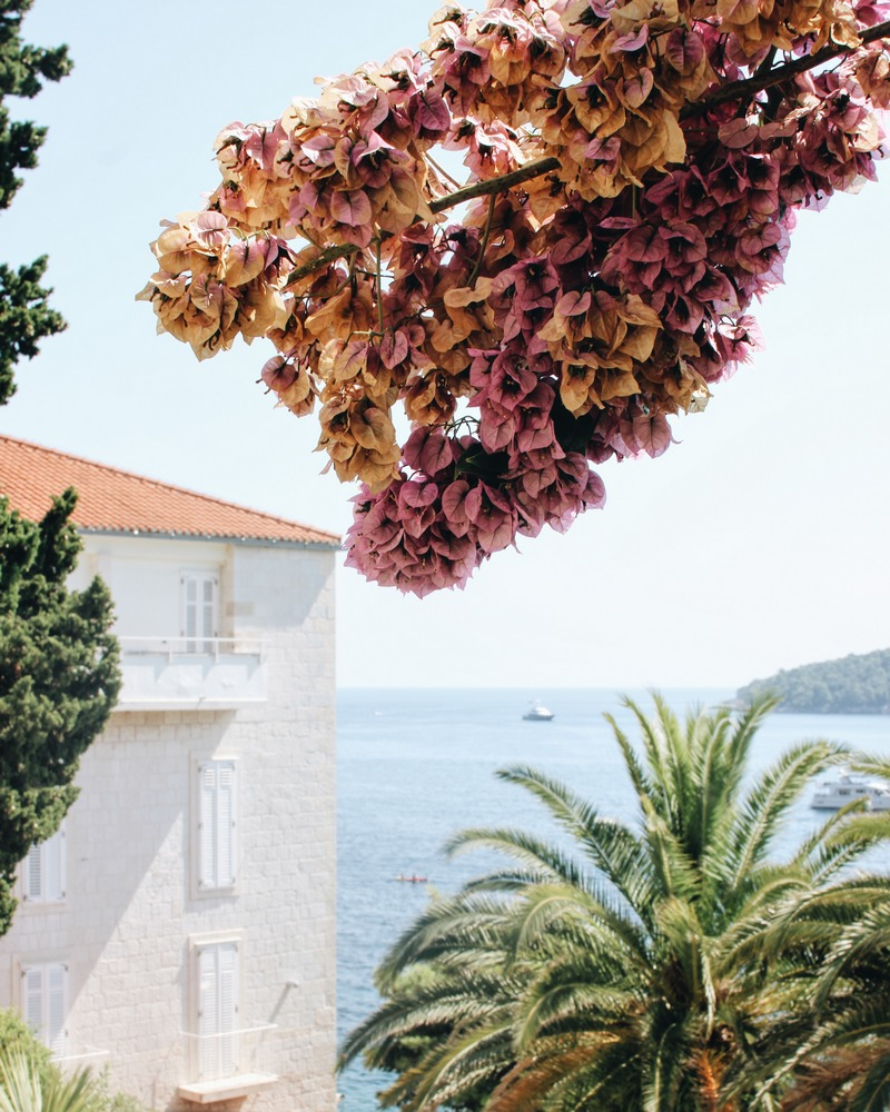 nature in Dubrovnik GoDubrovnik what to do