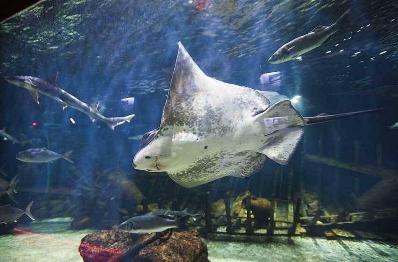Discover the adriatic sea in vranjic aquarium go dubrovnik for Split fish tank