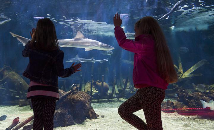 Vranjic Aquarium Split Adriatic Sea Dubrovnik Go Dubrovnik shark