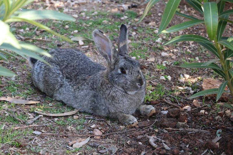 Bunny Lokrum Island
