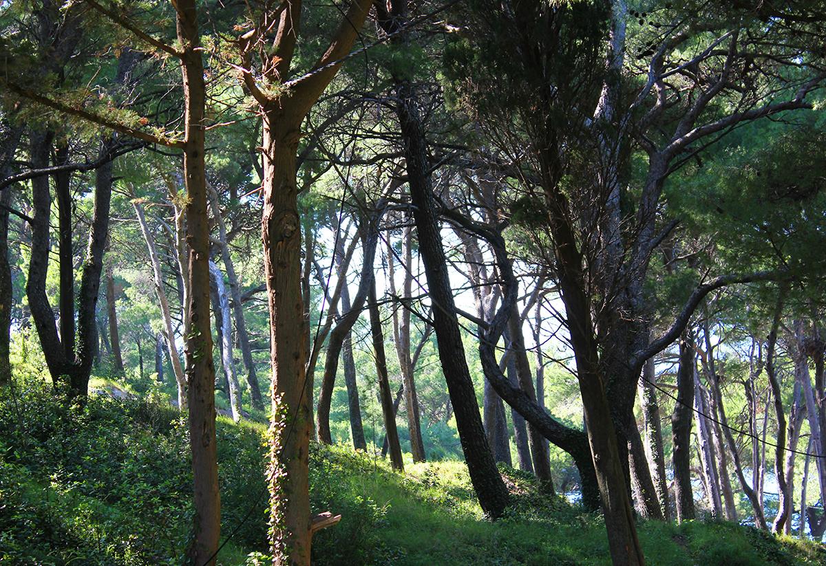 cavtat-go-dubrovnik-woods