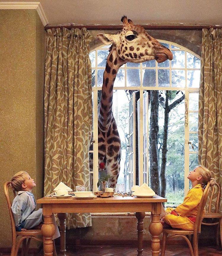 children and a giraffe