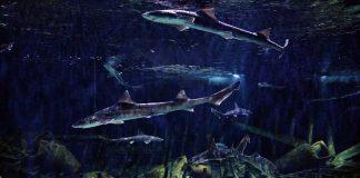 Vranjic Aquarium Split Adriatic Sea Dubrovnik Go Dubrovnik shark cover