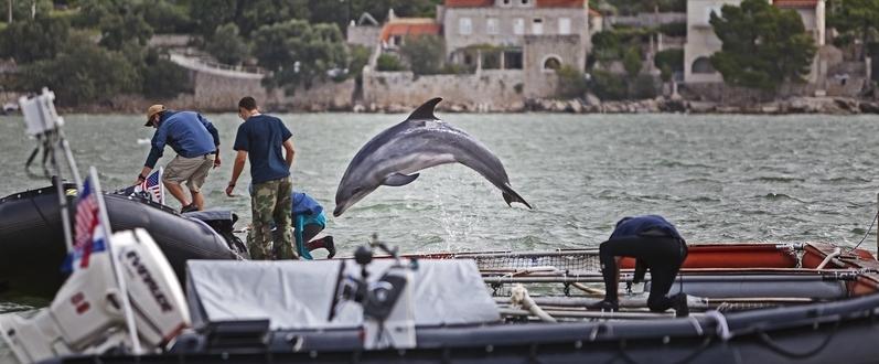 delphin Dario Bandur photo photography Dubrovnik GoDubrovnik party summer coast Adriatic sea