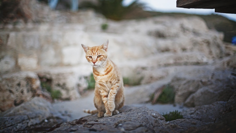 cat animal nature Dario Bandur photo photography Dubrovnik GoDubrovnik party summer coast Adriatic sea