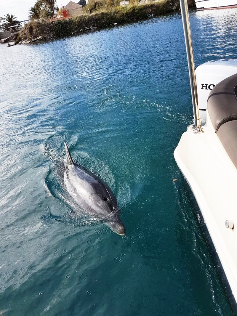 Adriatic Sea Boat Tour With Dolphins Dubrovnik Adriatic Explore Boat Tour Dubrovnik