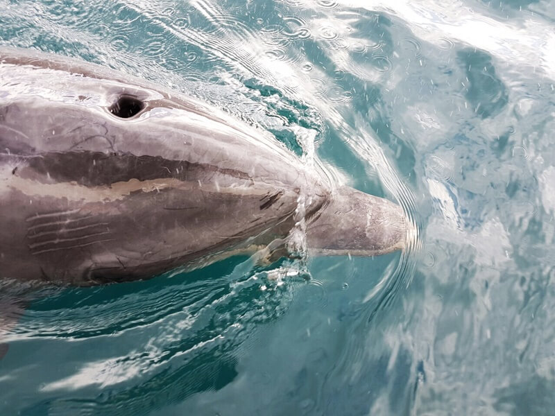Boat Tour With Dolphins Dubrovnik Adriatic Explore Boat Tour Dubrovnik Adriatic Sea