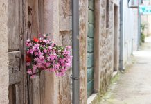 flowers Salt Ston City Walls Longest Wall In Europe
