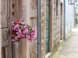 flowers Salt Ston City Walls Longest Wall In Europe