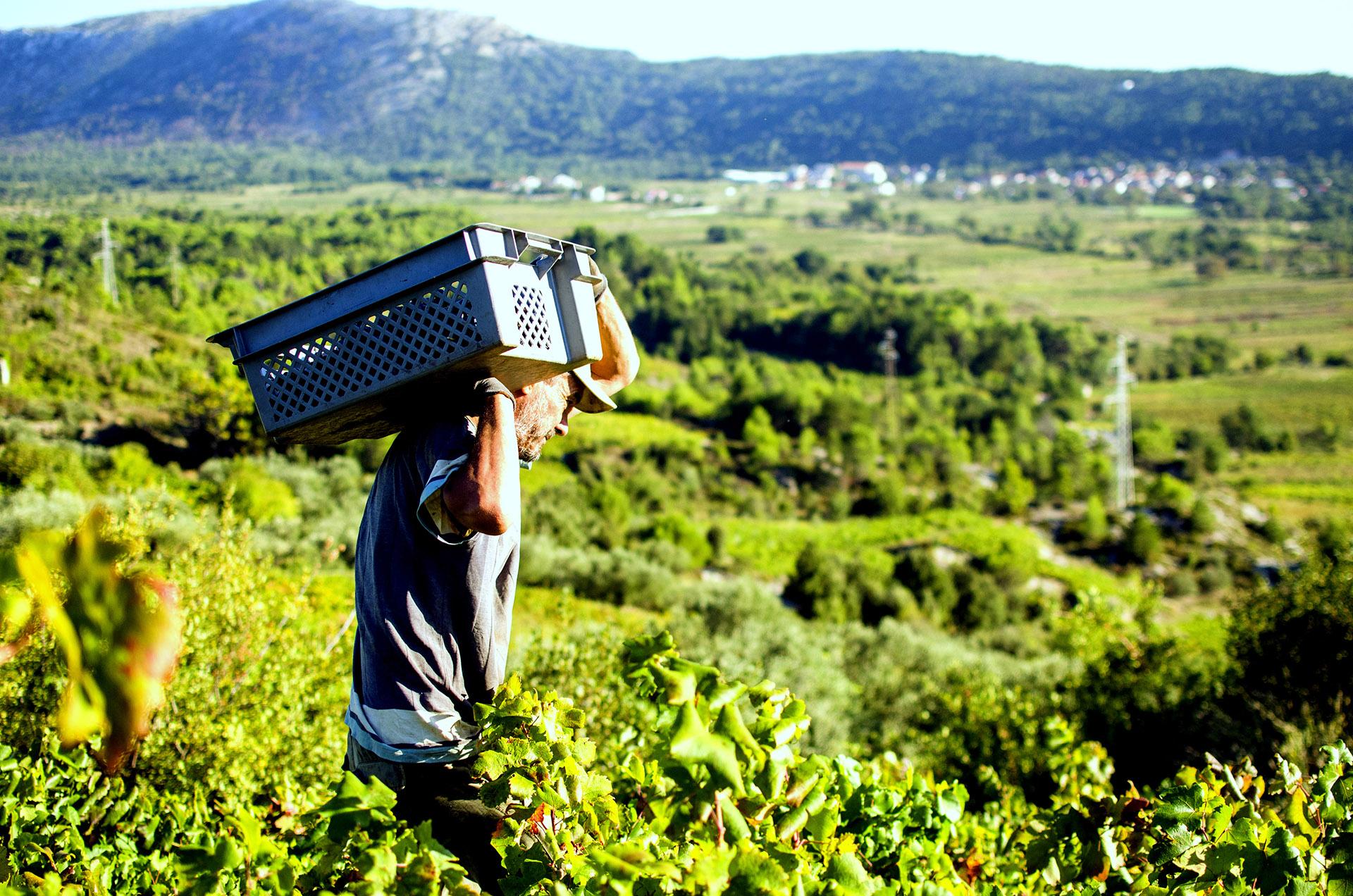 dubrovnik wine malvasia