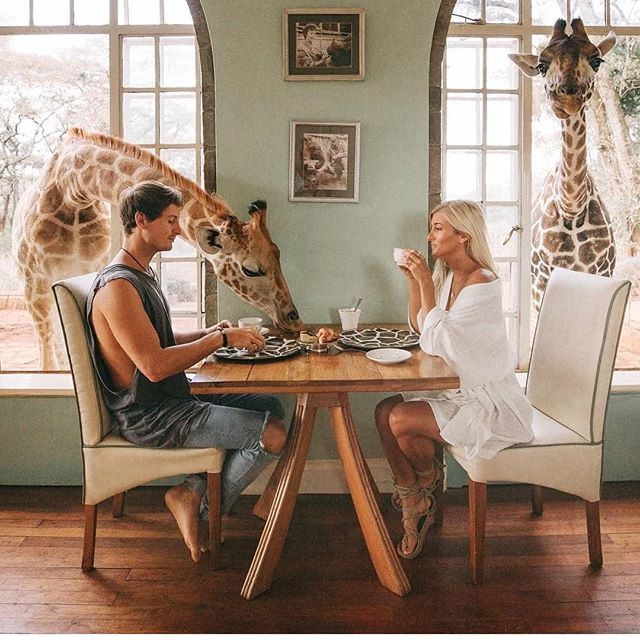 coffee with giraffe