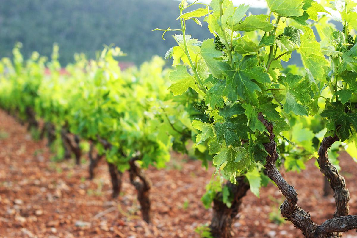 peljesac Dubrovnik wine tour