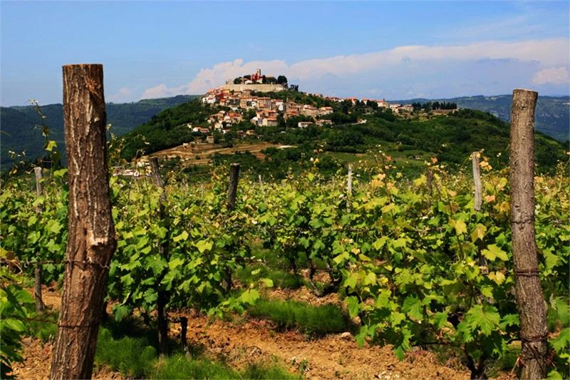 Istria Croatia Bizarre Dubrovnik Salez
