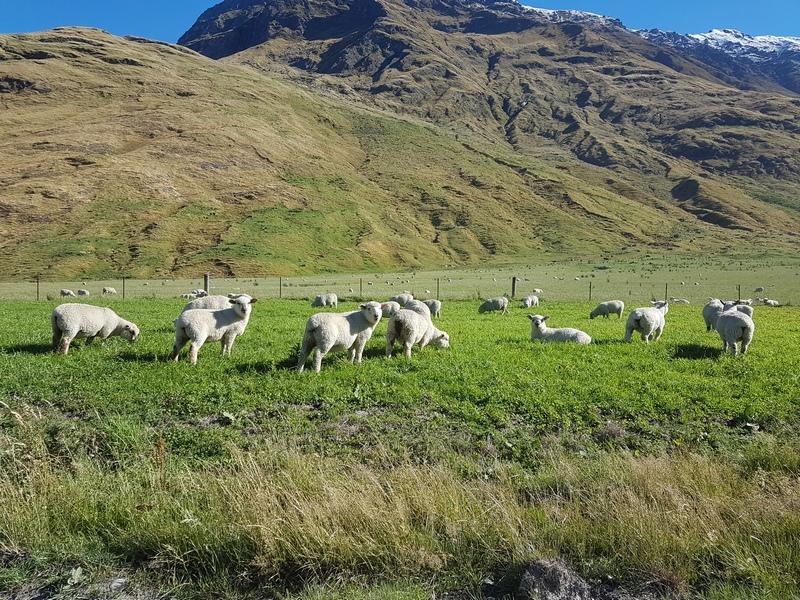priroda Australija Novi Zeland Ivan Vukovic