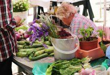 pjaca dubrovnik green market organic food go dubrovnik (8)
