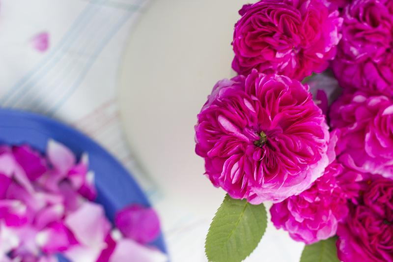 roses dubrovnik