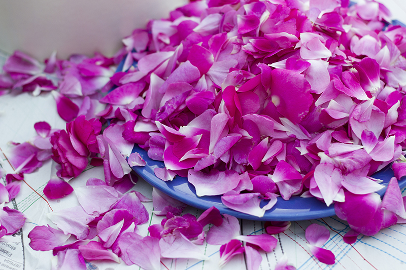 dubrovnik recipe roses