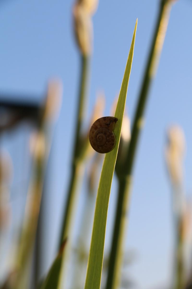snail Lokrum Island