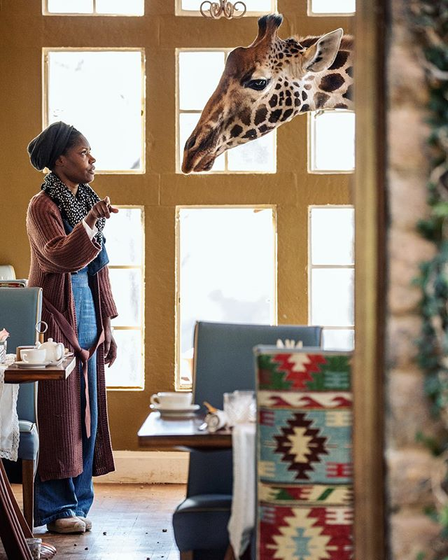talking to giraffe
