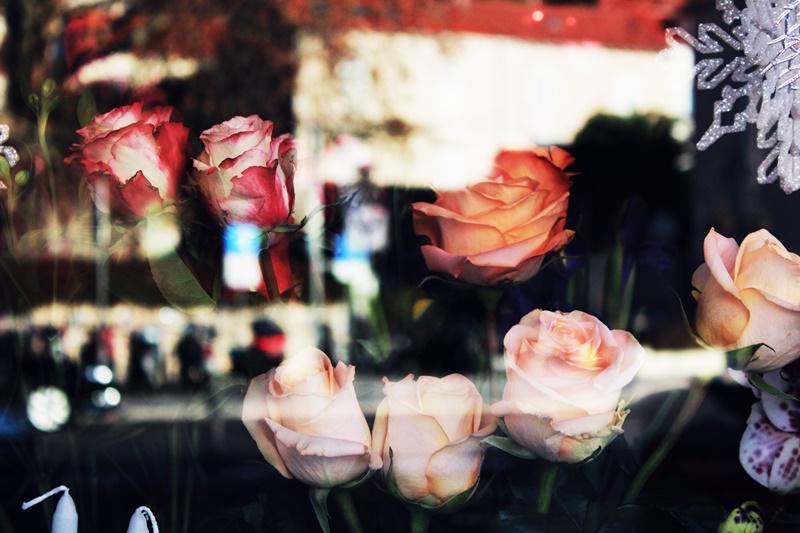 Ruže Vrtlar Dubrovački zimski festival GoDubrovnik instalacija