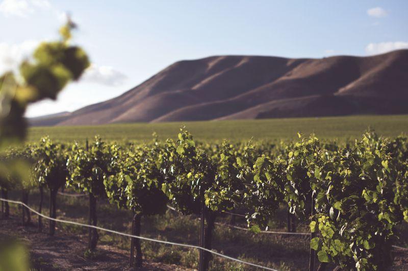 Cavtat Konavle region Chasing the Donkey travel winery