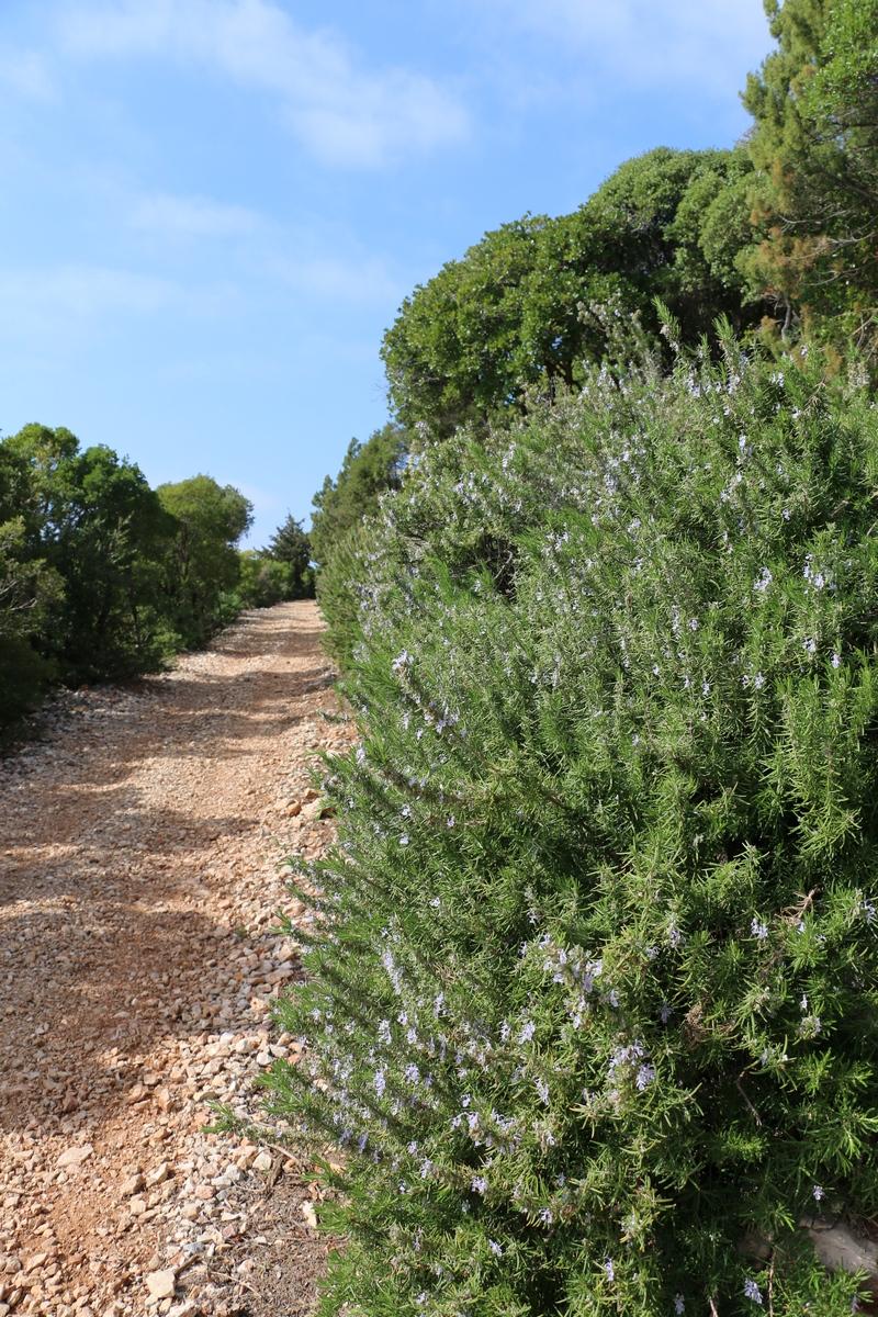 pathway Lokrum Island